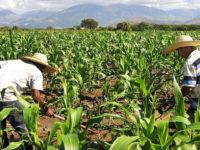 Los campesinos reclaman mayor atención del gobierno